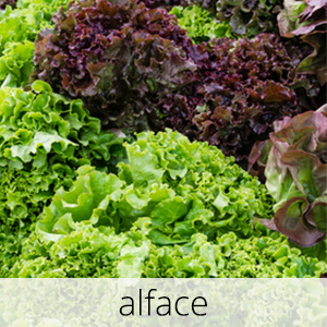 GlutenFree-Alface-1