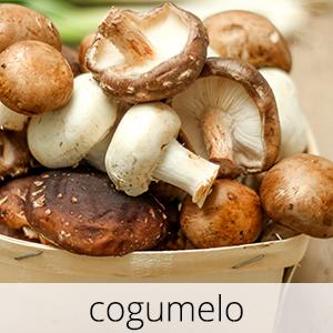 GlutenFree-cogumelo-1