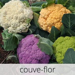 GlutenFree-com-paixao-Couve-flor-1
