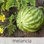GlutenFree-com-paixao-Melancia-1